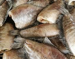 ปลา สลิด บางบ่อ ขายส่ง